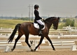 dressage in the rockies 3 and 4 2375.jpg