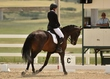 dressage in the rockies 3 and 4 2380.jpg