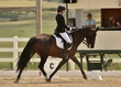 dressage in the rockies 3 and 4 2382.jpg
