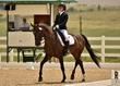 dressage in the rockies 3 and 4 2383.jpg