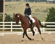 dressage in the rockies 3 and 4 2867.jpg