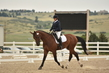 dressage in the rockies 3 and 4 2870.jpg