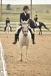 dressage in the rockies 3 and 4 3401.jpg