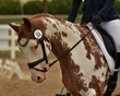 dressage in the rockies 3 and 4 3842.jpg