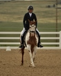 dressage in the rockies 3 and 4 3922.jpg