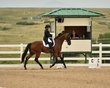 dressage in the rockies 3 and 4 4851.jpg