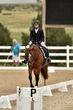 dressage in the rockies 3 and 4 6274.jpg