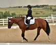 dressage in the rockies 3 and 4 6277.jpg