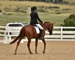 dressage in the rockies 3 and 4 6278.jpg