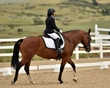 dressage in the rockies 3 and 4 6279.jpg