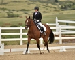dressage in the rockies 3 and 4 6313.jpg