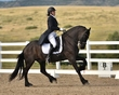 dressage in the rockies fall show 1002.jpg