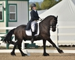 dressage in the rockies fall show 1009.jpg
