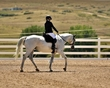 dressage in the rockies fall show 1015-d292d.jpg