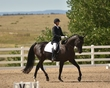dressage in the rockies fall show 1031.jpg