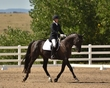dressage in the rockies fall show 1033.jpg