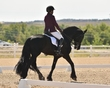 dressage in the rockies fall show 1181.jpg