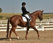 dressage in the rockies fall show 1649.jpg