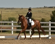 dressage in the rockies fall show 1653.jpg