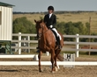 dressage in the rockies fall show 1656.jpg