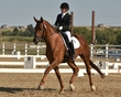 dressage in the rockies fall show 1658.jpg
