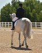 dressage in the rockies fall show 1719.jpg