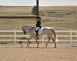 dressage in the rockies fall show 1721.jpg