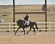 dressage in the rockies fall show 1803-ef02f.jpg