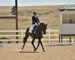 dressage in the rockies fall show 1805.jpg