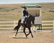dressage in the rockies fall show 1808.jpg