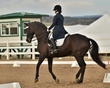 dressage in the rockies fall show 373.jpg