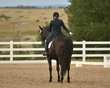 dressage in the rockies fall show 374.jpg