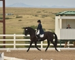 dressage in the rockies fall show 375.jpg