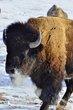buffalo 074.jpg