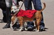 dressage for the cure Saturday 624.jpg